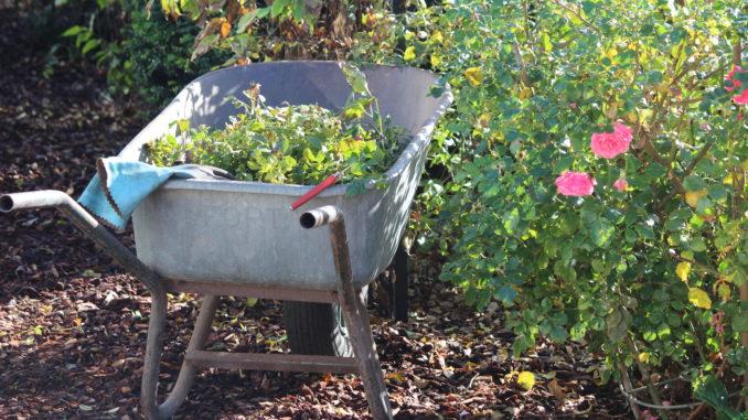 Winterklaar Maken Tuin : Winterklaar maken van een tuin dorpsplein diepenveen