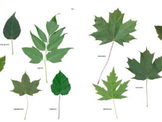 Bomen blad