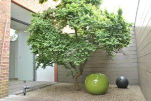 Kleine tuin - boom