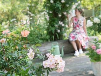Rozen in een moderne tuin