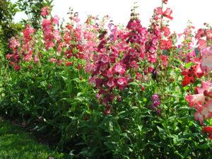 Veel bloemen - tuin bemesten