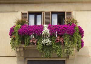 Italiaans balkon met surfinia