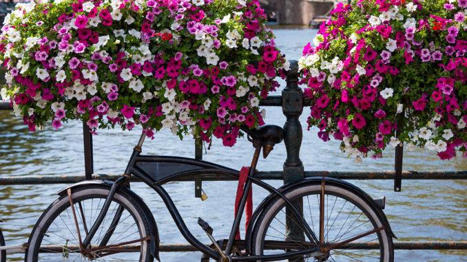 Versierde grachten van Amsterdam