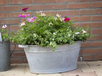 Zinken teil met planten