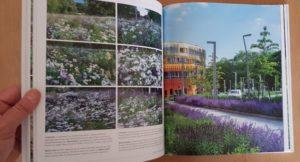 Voorbeeldfoto's tuinen
