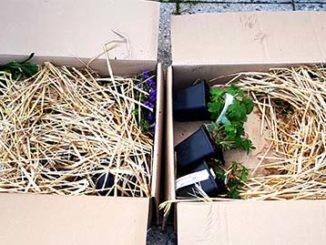 Tuinplanten via internet kopen