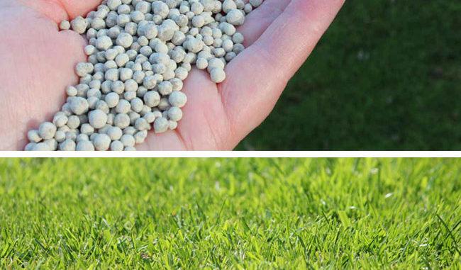 kalk op gras strooien