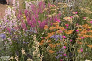 Tuinreizen Engeland - mooie plantcombinaties