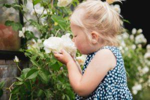 Gardenista roos kind (Frits Hoogers)