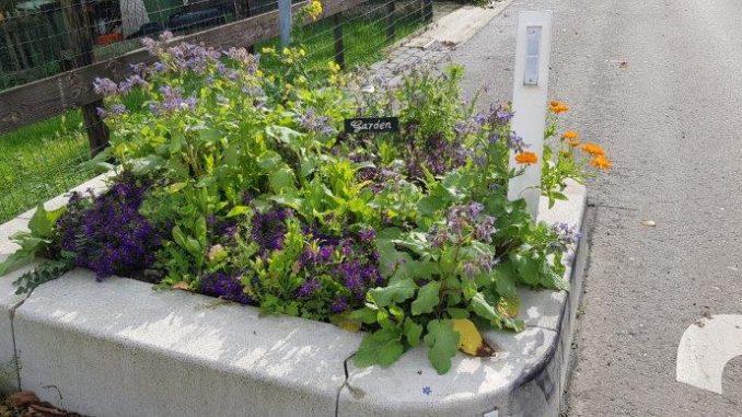 Tuinhappy.nl - guerilla gardening