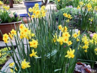 Opfleuren - ga lekker tuinieren