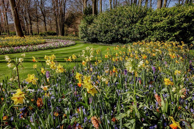 Foto Keukenhof - prachtige combinatie van Narcissen, zalmkleurige en paarse hyacinthen, keizerskronen en meer.