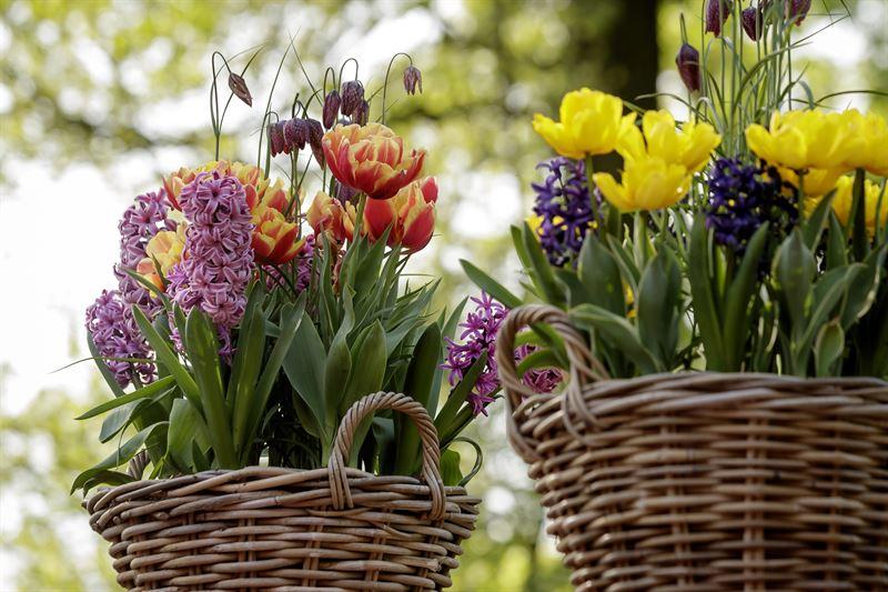 Foto Keukenhof - fritillaria, dubbele tulpen en hyacinten
