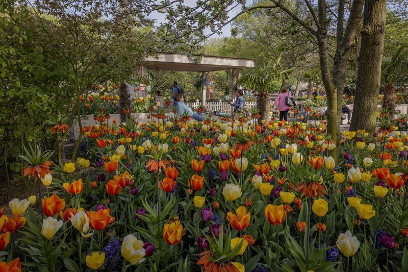 Foto Keukenhof - diverse soorten tulpen in combinatie met oranje keizerskronen en blauwe hyacinten