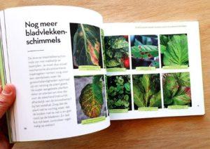Schimmels in tuinplanten