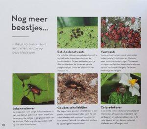 Ziekten en plagen in de tuin