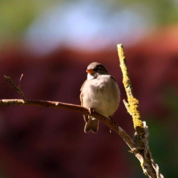 Vogeltje in de zon in de boom