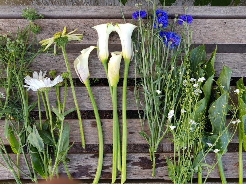 Plukbloemen - Zantedeschia, Zonnehoed, Margriet, Achillea, Korenbloem, Gipskruid