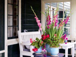 Gladiolen in potten