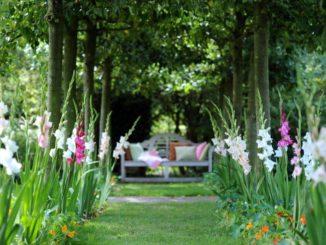 Gladiolen in een plantenborder