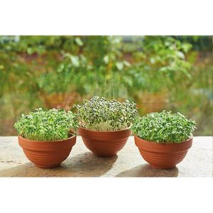 Microgreens in terracotta potjes - Tuinhappy