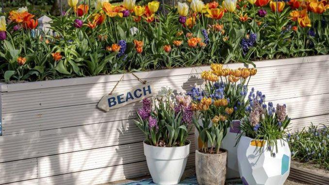 Plantenbak vol met bloembollen