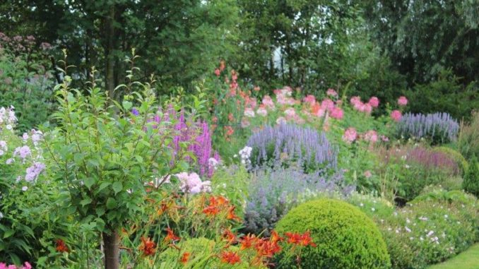 Kleurrijke plantenborder - Tuinhappy tuinblogger