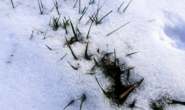 Gazon met sneeuw en ijs - sneeuw op gras - blogger tuinhappy