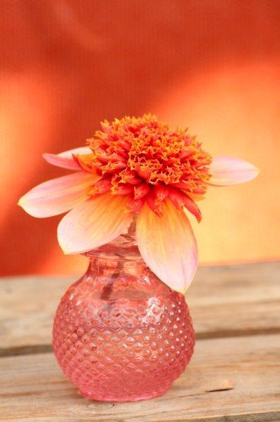 Oranje bloem in vaasje
