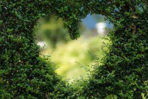 Groen hart in de haag - tuinblogger - tuinhappy
