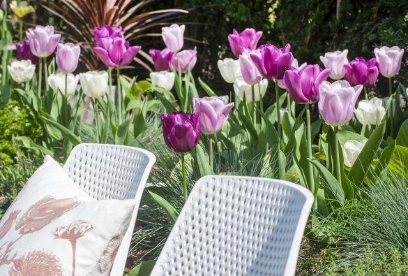 Bloembollen in de tuin - tuinhappy - tuinblogger - blogger tuin