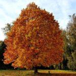 Boom in herfstkleuren tuinhappy blogger tuin