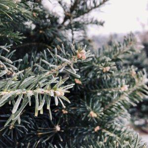 Kerstboom hergebruiken tuinhappy tuinblogger blogger tuin