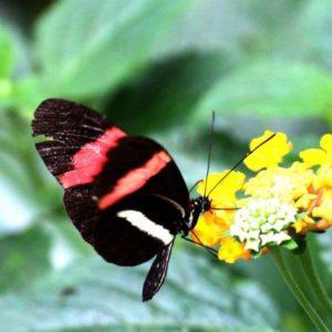 Vlinder gele bloem postman zwarte vlinder gele bloem