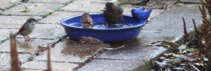 Vogels in rond blauw vogelbadje