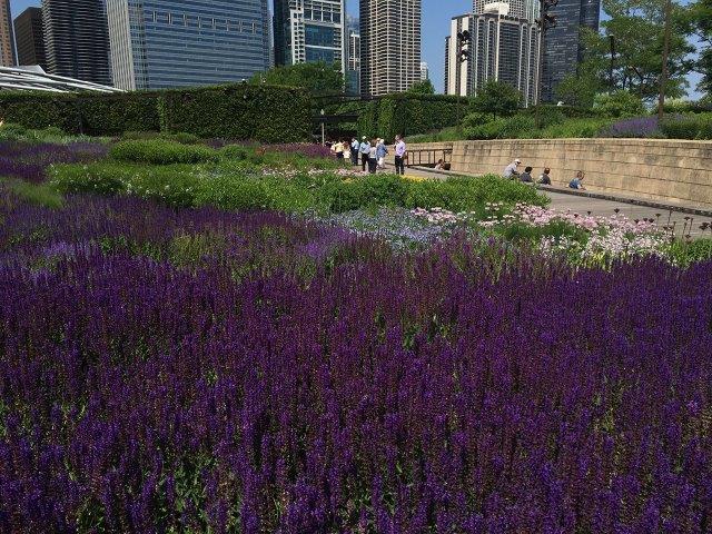 Park Lurie Garden in Chicago