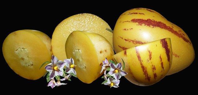 Bloemen en vruchten Pepino