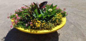 Schaal met buitenplanten met hydrokorrels