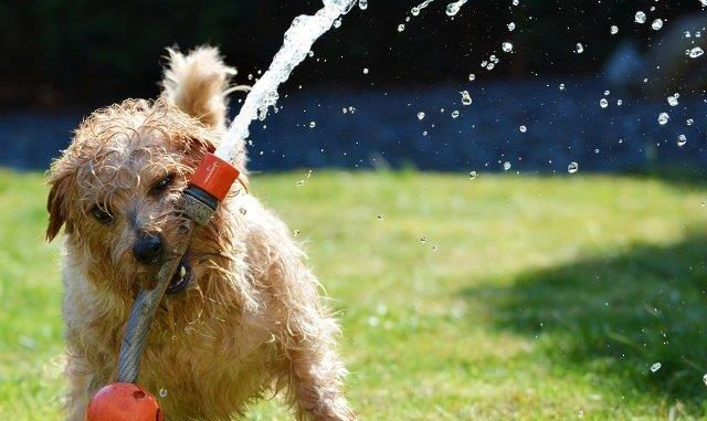 Hond in de tuin