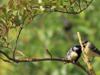Een boom in de tuin trekt vogels