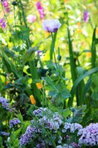 Bijen- en vlindertuin