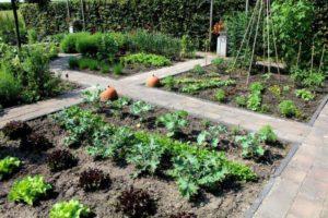 Moestuin - groentetuin - tuin ontwerpen
