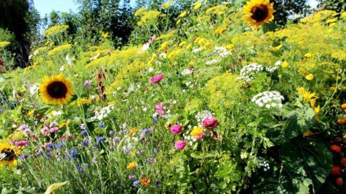 Bloemenmengsel zaaien (Friendly Flower Mix)