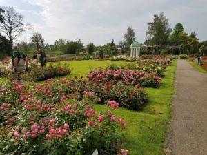 Rozenpark Guldemondplantsoen
