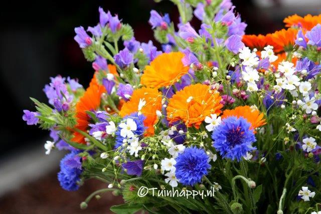 plukboeket met korenbloemen gipskruid goudsbloem en bijenvoer