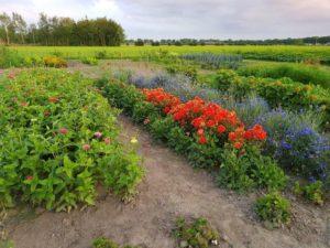 Bloemen en groente in buurttuin