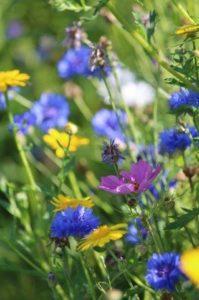 Bloemenmengsel in de buurttuin