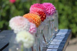 Diverse pompon soorten