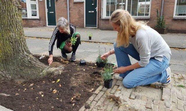 Boomspiegeltuin Utrecht