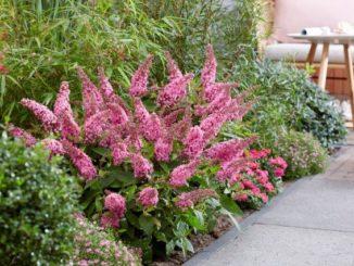 Onderhoudsvrije groene tuin